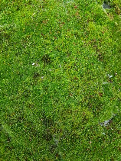 Wallpaper Wall Art Backgrounds Full Frame High Angle View Lawn Grass Close-up Green Color