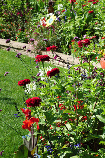 Flowerbed Beauty In Nature Berry Fruit Close-up Day Flower Flowerbed Flowerbeds Flowering Plant Food Food And Drink Freshness Fruit Green Color Growth Healthy Eating Leaf Nature No People Outdoors Plant Plant Part Red Ripe