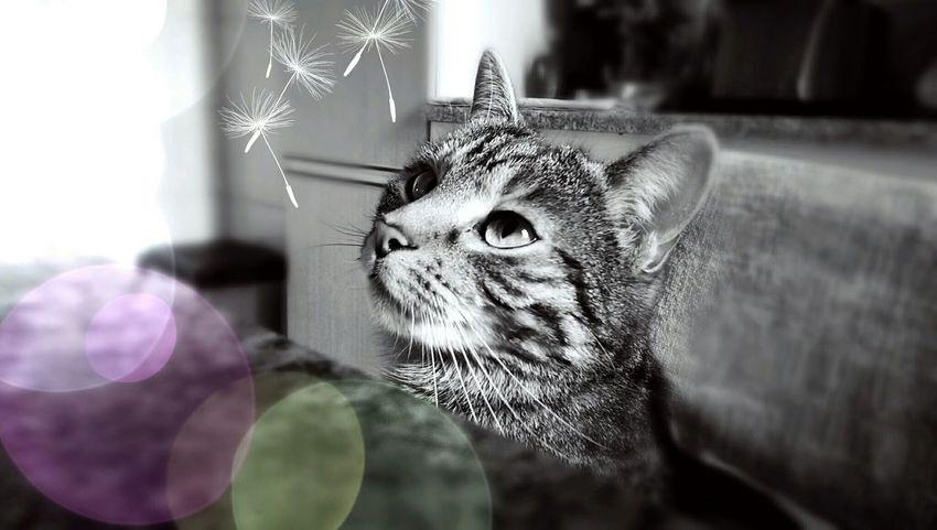 It's A Cats Life Cats Of EyeEm Cat♡ Cat Lovers Mom's Cat Blsckandwhite Dandelion Catlovers