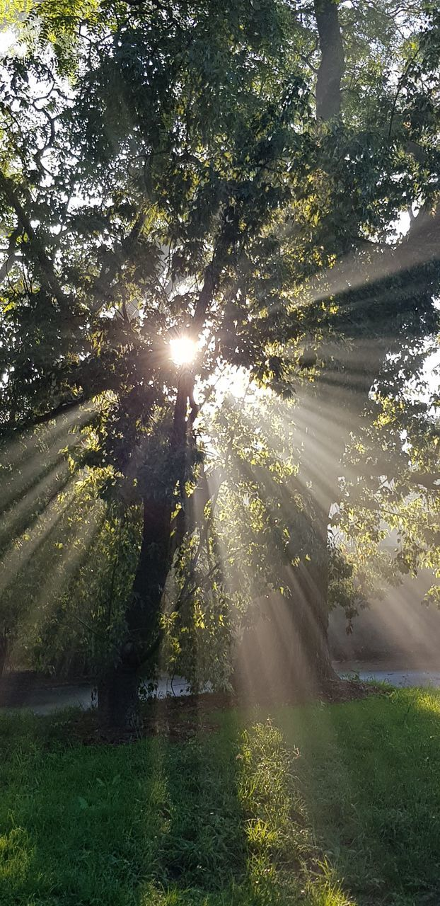 tree, plant, sunlight, sunbeam, beauty in nature, growth, nature, sun, lens flare, tranquility, day, scenics - nature, no people, streaming, tranquil scene, land, outdoors, sunny, sky, green color, bright, brightly lit