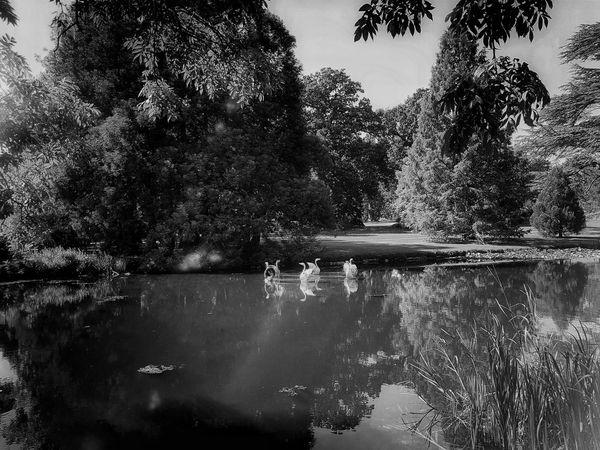 Tree Water Reflection Lake Outdoors Beauty In Nature EyeEm Best Shots Eye4photography  EyeEm Gallery Landscape_photography Landscape_Collection Tranquil Scene