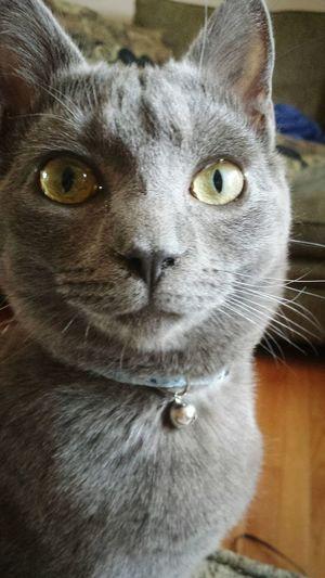 I love her eyes ? Cat Eyes