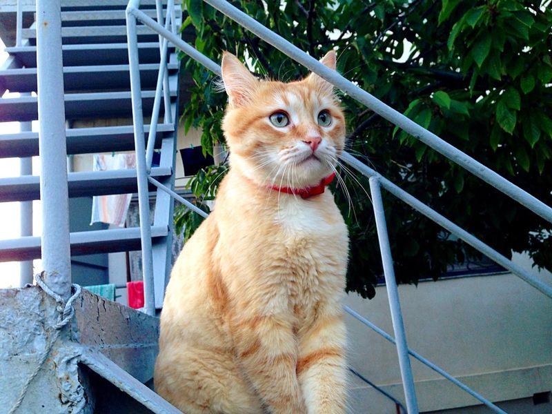Cat Cats Cat♡ Áfonya рыжий кот Афоня Afonsiko Отдых в Крыму😸