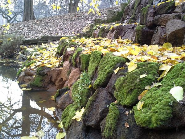 Autumn is here Autumn Falevelek Leaves Moss Nature Outdoors Stone Yellow ősz