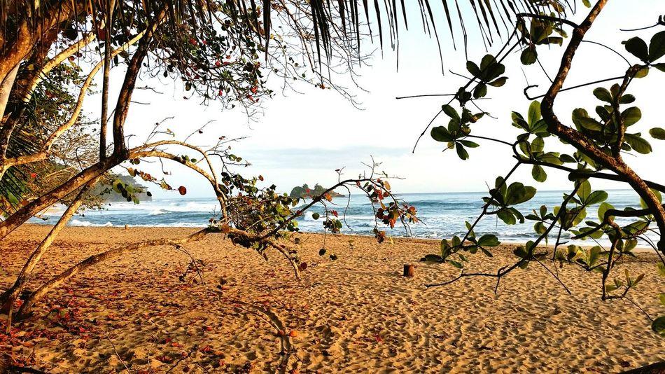 Waking up to the surf Pura Vida ✌