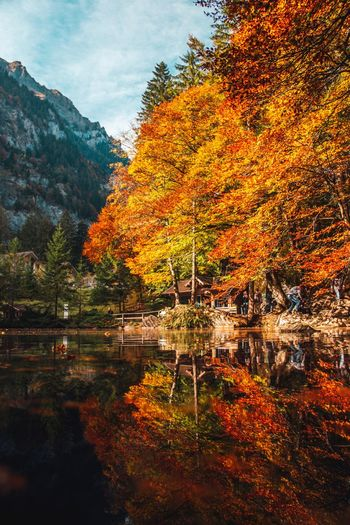 Otoño Plant Tree Autumn Beauty In Nature Nature Tranquility Water Change No People Sky Non-urban Scene Outdoors Orange Color Lake Scenics - Nature Growth Idyllic Tranquil Scene Reflection Day