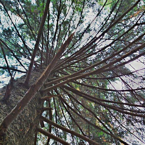 Russia осень Landscape Россия октябрь October Autumn Хорошо красиво Forest Лес Instapic Instadaily Instalike Instalook краски  Colors Tree