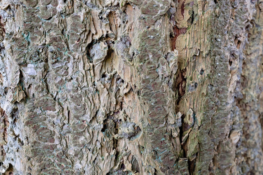 Rough tree bark on a tree trunk Bark Tree Trunk Backgrounds Close-up Day Full Frame Nature No People Outdoors Pattern Rough Textured  Tree Tree Trunk Wood - Material