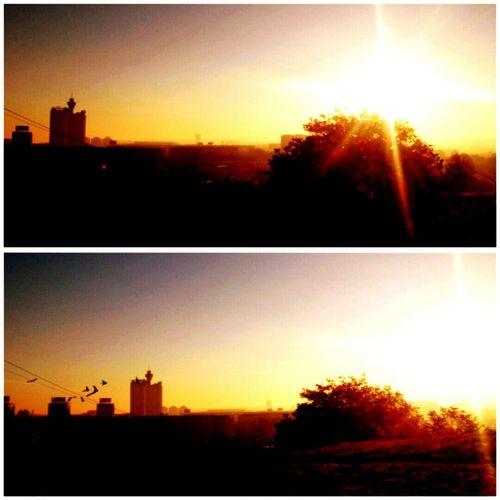 🍂☀ Morninglikethis Lovely Sunrise Belgrade November Autmun Birds GoodDay❤