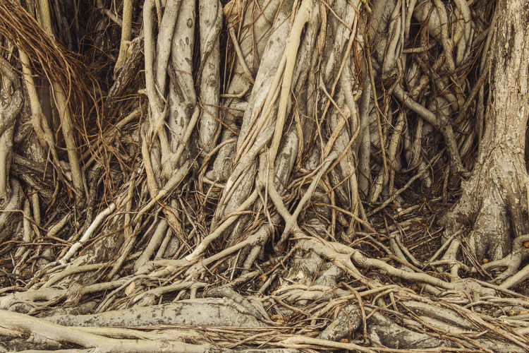 Nature Roots Roots Of Tree Roots Of Life