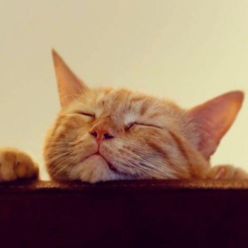 Bobbyinstacat Cat