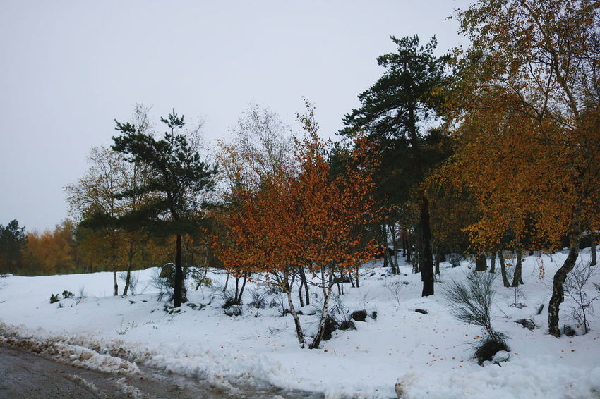 Autumn Colors 🍃 Tree Snow Cold Temperature Nature Winter No People Tranquility Outdoors Beauty In Nature Sky Landscape Day Fieldtrip Ornithology  Close-up Serradaestrela Valedorossim Portugal Portugaldenorteasul Trees Naturelovers