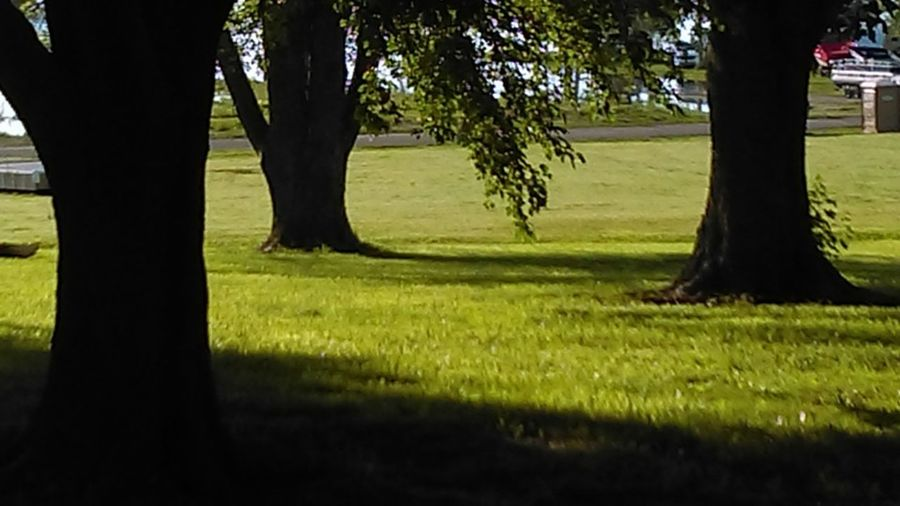 Camping Field Meditation Peace And Quiet TREE TRIO Taking Time Off Beauty In Nature Day Grass Green Color Growth Light And Shadow Nature Outdoors Shadow Sunlight Tree Trunk Vacation