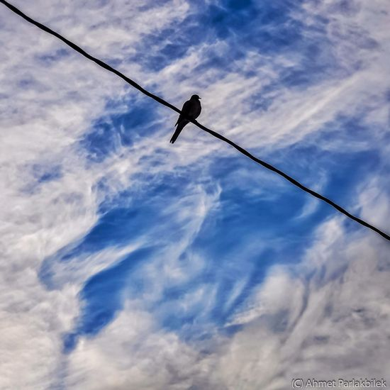 Bird on a wire.. Istanbul Cloud Porn Clouds And Sky Sky Collection