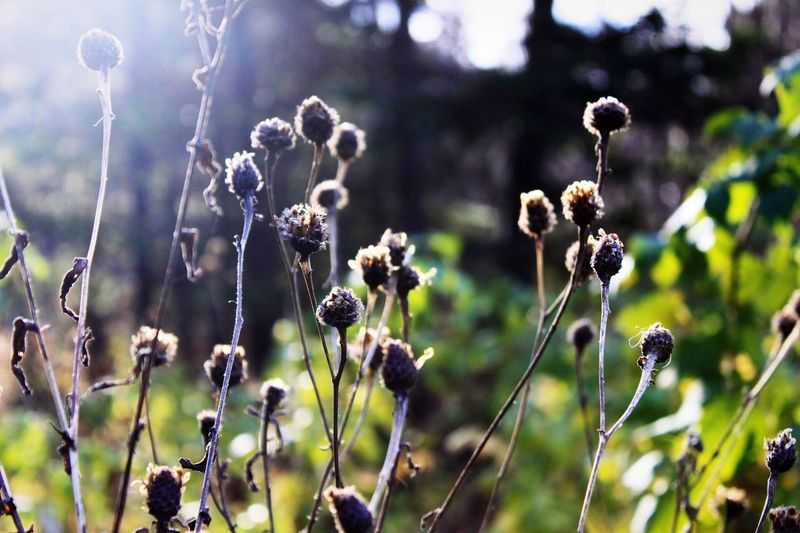 Weeds Weeds Flower Flowers Garden Sunrise Close-up Sunshine Landscape Plants Sun Growth Growing Summer Grass Nature Traveling Landscape_Collection Taking Photos Green Nature_collection