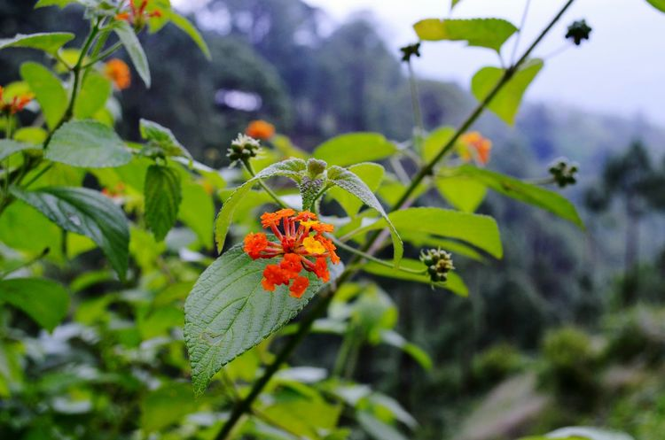 Wild Flowers Plant Orange Flower Red And Yellow Flower Green Leaves Outdoor Photography Focus On Foreground Focus Nature Natural Beauty Natural Colours Nature_collection Nature Photography EyeEm Nature Lover EyeEm Gallery Eye For Nature