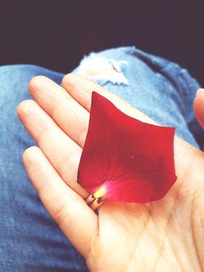 A petal #jeans #rose Petal #petal #romantic Mood #Rose #flower  #tenderness EyeEm Selects Human Hand Close-up