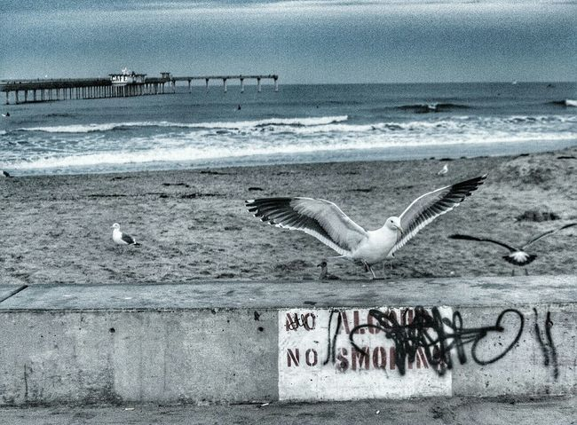 Deceptively Simple seagull fly away Enjoying Life Street Photography SEAGULL IN FLIGHT Flying Seagull Seagull Landing