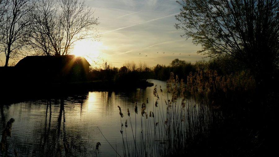 Dutch Countryside The Week On EyeEm
