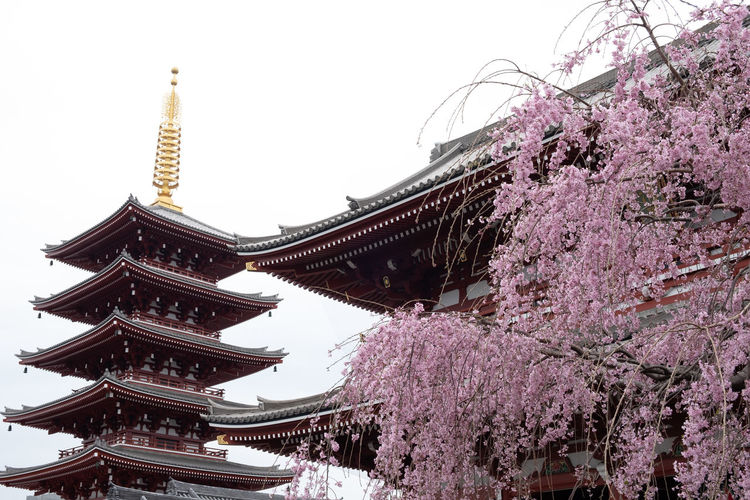 Built Structure Architecture Building Exterior Plant Tree Sky Flower Low Angle View Flowering Plant Religion Place Of Worship Nature Belief Spirituality Springtime Blossom Clear Sky Growth Freshness Cherry Blossom No People Cherry Tree Outdoors Spire  Japan
