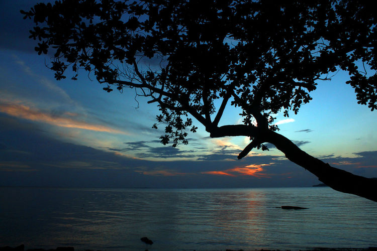 sunset in tepi laut Beauty In Nature Branch Cloud Cloud - Sky Daily Life Horizon Over Water Indoensianmale Kepulauan Riau Ketanjungpinanglah Nature Outdoors Reflection Scenics Sea Silhouette Sky Sunset Tanjungpinang Tepi Laut Tranquil Scene Tranquility Tree Water Wonderful Indonesia Wonderful Kepri