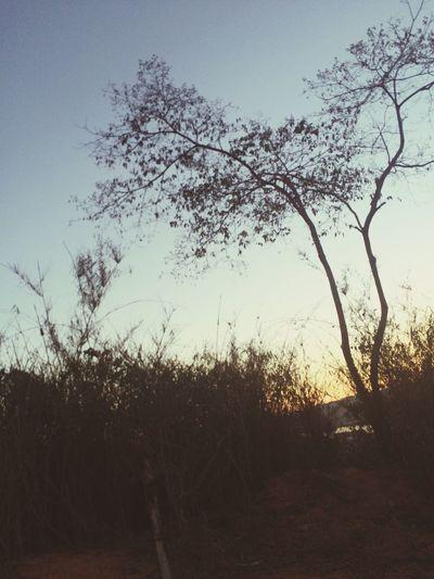 Picodaibituruna Traveling Nature Nature On Your Doorstep