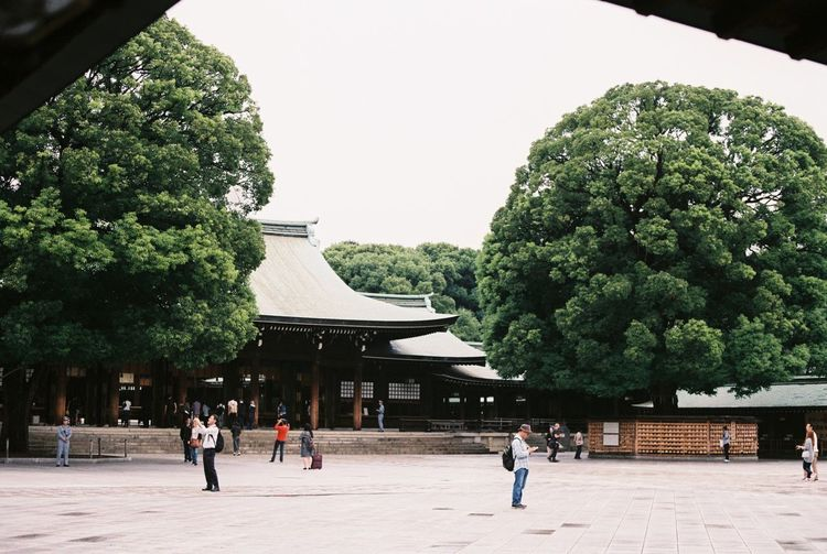 Architecture Big Tree Buddhism Built Structure Clear Sky Enjoyment Famous Place History International Landmark Leisure Activity Lifestyles Meiji-Jingu Outdoors Religion Spirituality Temple Tokyo Tourism Tower Travel Travel Destinations Tree Weekend Activities World Herritage
