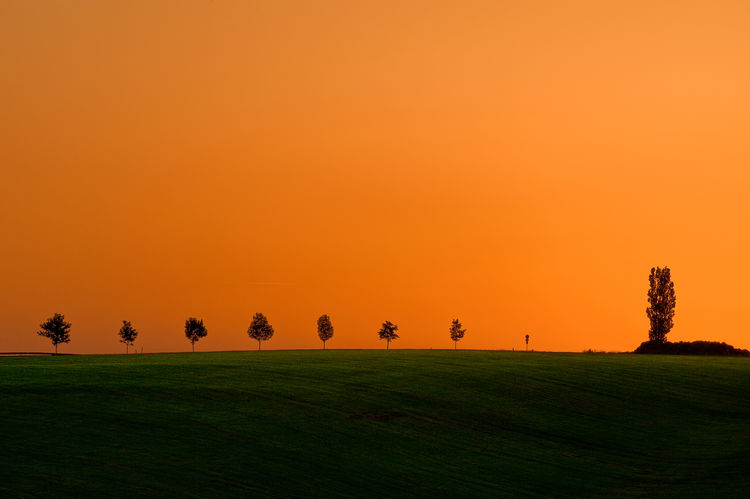 Evening Sky over a tranquil landscape Rural Beauty In Nature Clear Sky Copy Space Environment Evening Sky Field Grass Green Color Horizon Idyllic Land Landscape Meadow Nature No People Orange Color Plant Row Scenics - Nature Sky Sunset Tranquil Scene Tranquility Tree