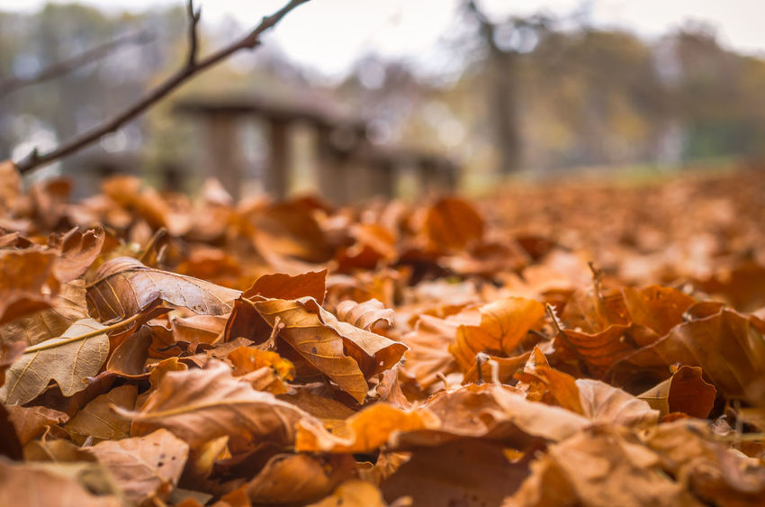 Exploring the small mountain town of Krushevo in Macedonia Autumn Beauty In Nature Change Close-up Day Dry Fallen Fragility Large Group Of Objects Leaf Leaves Maple Maple Leaf Nature No People Outdoors Tranquility