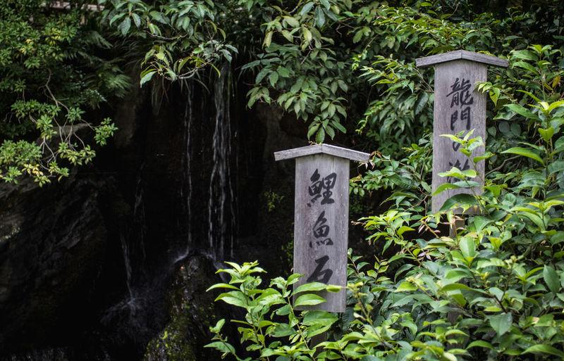 Board Day Hiragana Ivy Japan Japanese  Japanese Writing Kanji Kanji Signs Nature No People Outdoors Signs Tree Water Waterfall Wooden
