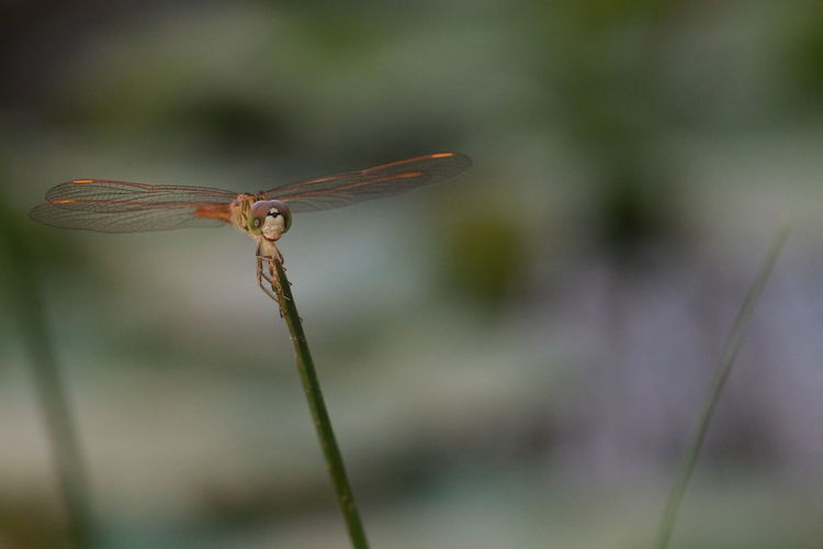 Close up small
