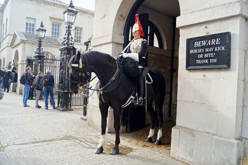 Horse Day Outdoors Men City Tourism Travel Great Britain London Classtrip2016 People Travel Destinations