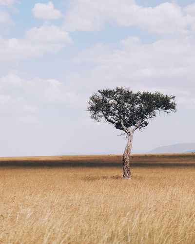 A lone tree in
