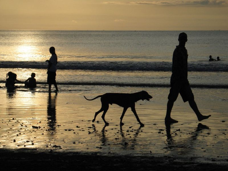 Walking Leisure Activity Silhouette Sea Beach Water Sunset Nature Reflection Sand Sky Horizon Over Water Real People Domestic Animals Beauty In Nature Mammal Dog Walking Full Length Scenics One Animal Lifestyles