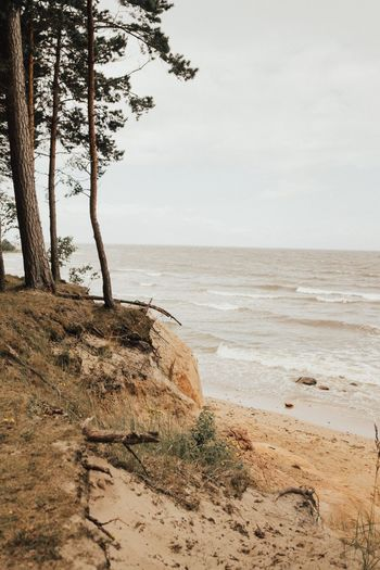 EyeEm Selects Sea Nature Tree Beauty In Nature Tranquility Scenics Tranquil Scene Sky Sand Horizon Over Water Beach No People Landscape Outdoors Water Branch Day Beauty In Nature Nature Forest Tree Sand & Sea Breathing Space The Week On EyeEm