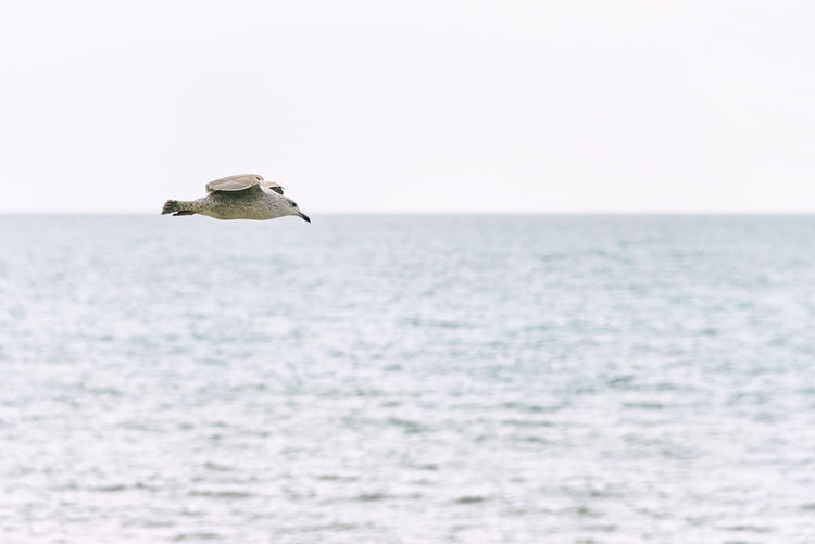 Seagull Over The Sea Sea Horizon Nature Bird Seagull Backgrounds Copy Space Environment Ocean Aligned Align Alignement Water Economy Freedom Concept Flying Nature Beautiful Ecosystem  Beauty In Nature Animal Horizon Over Water Coast Sky