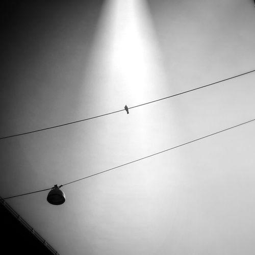Bird on a wire Urban Minimal Rsa_minimal Minimal Streetphotos Minimal Edits