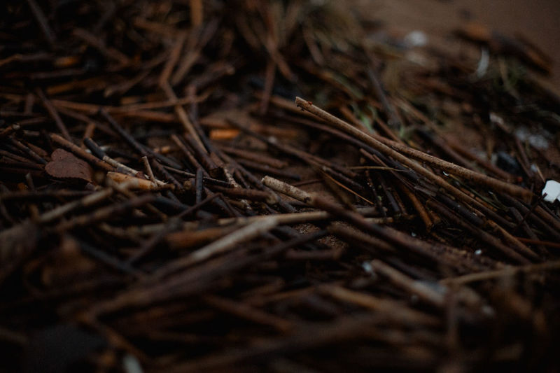 Selective Focus Close-up No People Plant Brown Dry Nature Land Twig Day Backgrounds Wood - Material Full Frame Outdoors High Angle View Field Stick - Plant Part Tranquility Vulnerability  Hay Dried