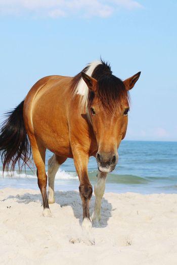 Horse at beach against blue sky