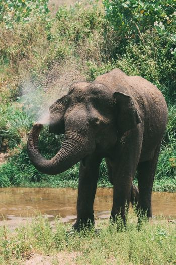 Elephant standing on field in forest