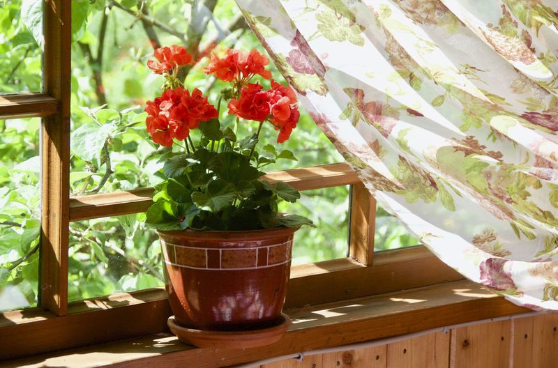 Flower Nature Growth Plant No People Day Indoors  Beauty In Nature Fragility Freshness Tree Close-up Red Flower Greenhouse Cantryside Cantry Wood - Material Windows