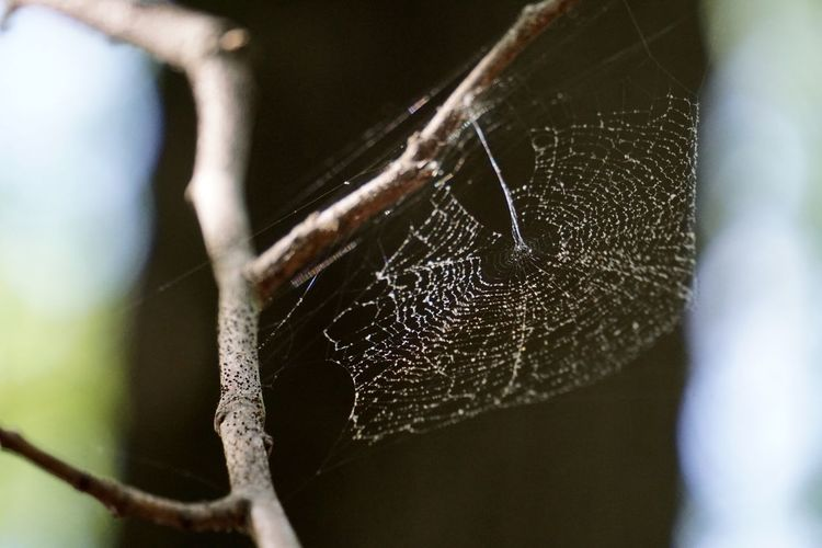 Stone Mountain State Park Spider Web Close-up Focus On Foreground No People Web Beauty In Nature Fragility