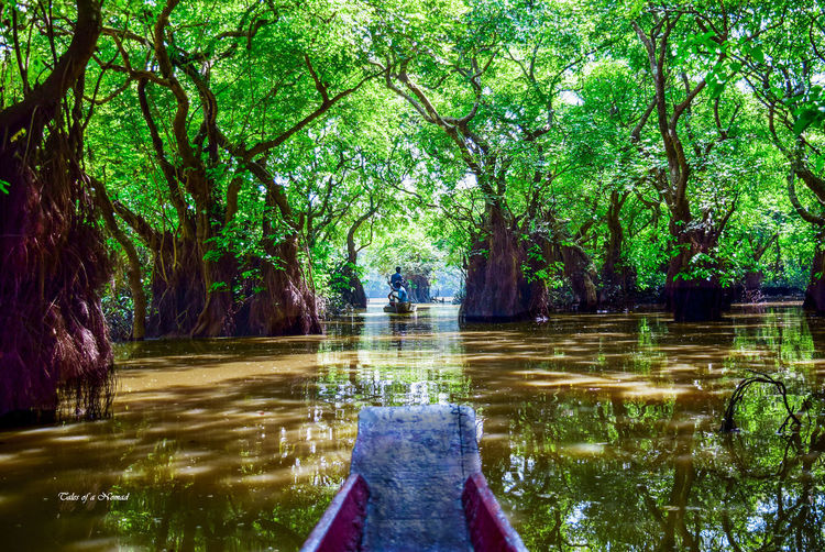 From the Bow Nikon Ratargul Swarp Forest Sunny Swamp Sylhet Landscape Tales Of A Nomad For Sell For Selling Nikonphotography First Eyeem Photo