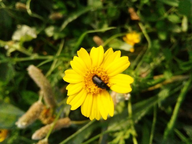 Flwoers Popular Photos Taking Pictures Taking Photos Nature Nature Photography Nature_collection Yallow Bug Bugs