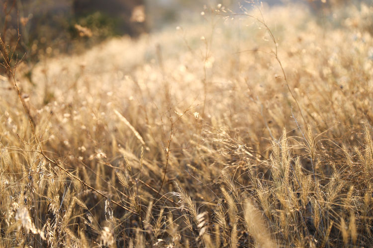 Field Land
