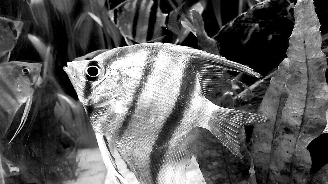 FishEyeEm !!!♥♥