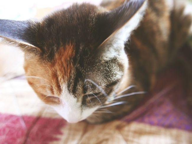 I took this photo in grandma's house:) Night Night, Sleep Tight Sleeping Cat Cute Close-up Sleeping Sleepy Cat Animal Tortoiseshell Tortoise DIM EyeEm
