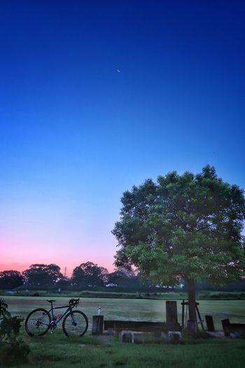 サイクリング 自転車 ロードバイク 木陰 月 日の出 日の出前 朝日 朝 朝焼け グラデーション 三日月 空 イマソラ Sky Cycling Bicycle Roadbike Moon Crecentmoon Gradation Sunrise Star - Space Galaxy Nature