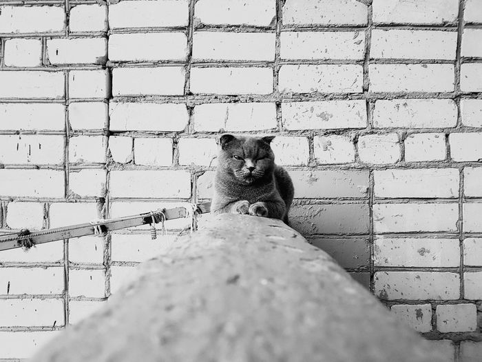 Low angle view of cat on wall