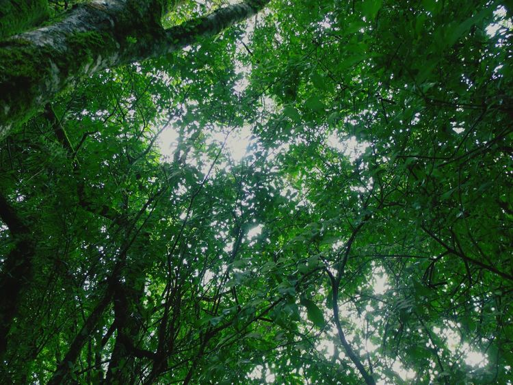 So Green What Im Doing Right Now Seeing What We Could See Loving Nature Treescollection Walking Around